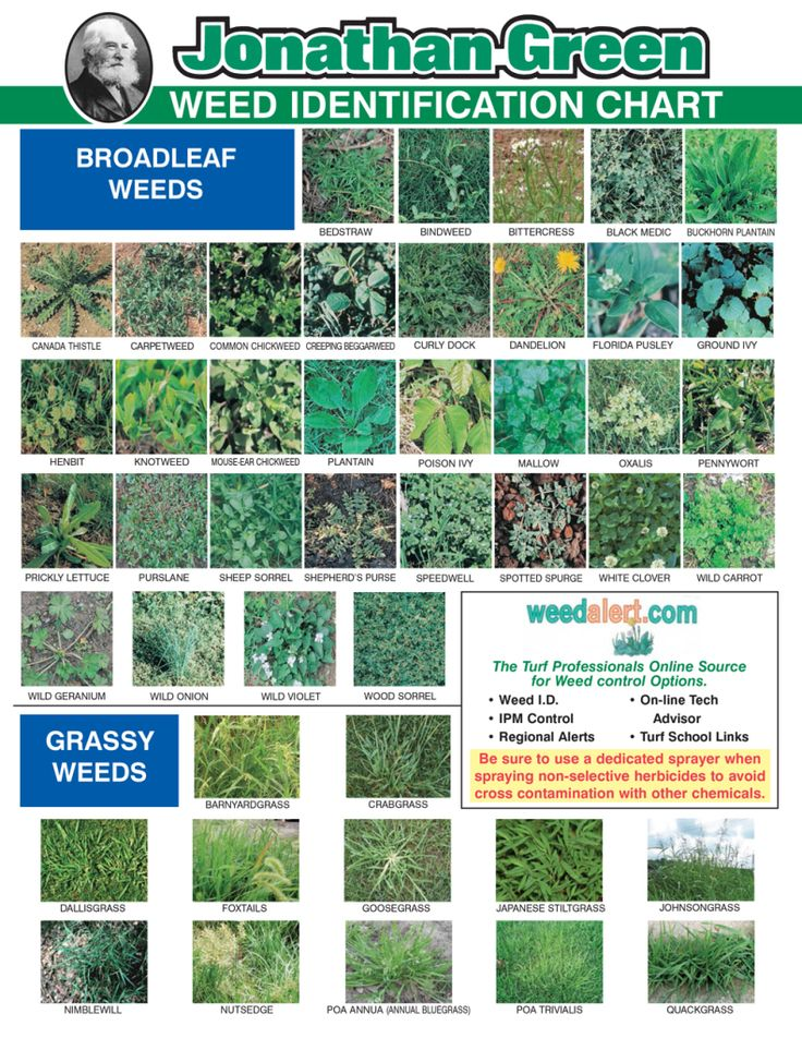 Lawn & Garden Weed Identification Chart