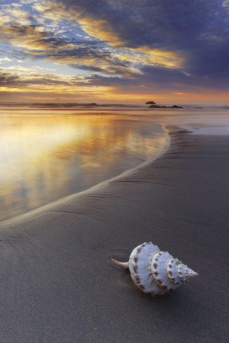 : Shell | Aaron Pryor
