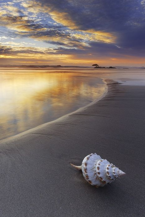 : Shell | Aaron Pryor