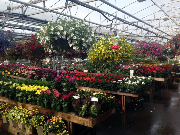 Annual House in May at Little Mountain Garden Centre.