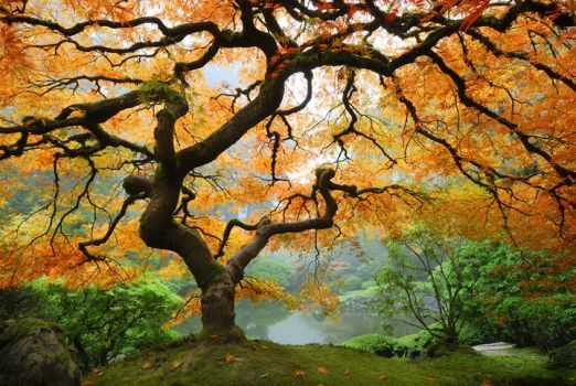 Autumn Maple (70 pieces)