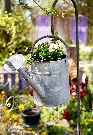Watering Can Planter on a shepard's hook