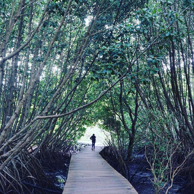 Pengunjung melewati jembatan kayu di Taman Hutan Rakyat Ngurah Rai Suwung. Tahura termasuk taman yang menyediakan ruang terbuka bagi warga untuk menikmati udara segar.  #Bali #Tahura