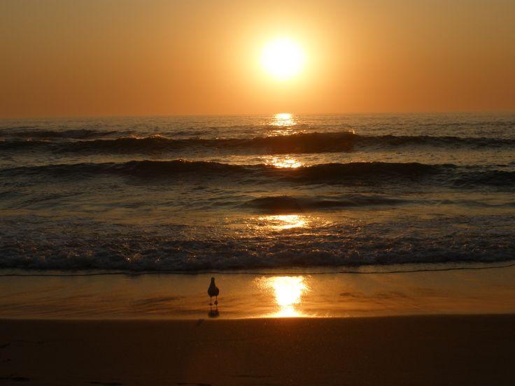 """""""Gaivota dos Alteirinhos"""". Praia dos Alteirinhos - SW Alentejano - Portugal"""