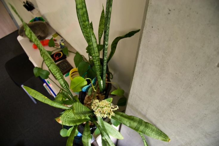 Oltre 25 fantastiche idee su piante della camera da letto - Piante in camera ...