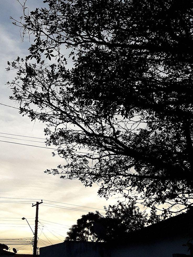 #cottonline #todomundousa, agriculture cotton, cotton, cotton ad, cotton commercial, cotton farmers, hastes flexiveis, origin of cotton fabric, sustainable cotton, top cotton, top cotton hastes flexiveis, top cotton lenços umedecidos estilo proprio by sir @sicaramos