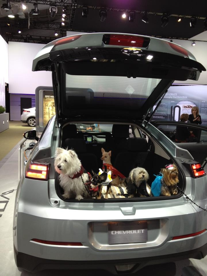 A Passel Of Pups Posed In The Hatch Of This Chevy Volt At The New