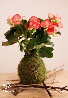 Unos de nuestros kokedamas mas especiales por su belleza y elegancia. Tenemos una cuidada selección flores aptas para interior y exterior. Tenemos una amplia variedad de especies de las familias phalaenopsis, dendrobium y paphiopedilum. Muchas de nuestras orquídeas se realizan bajo pedido especial para garantizar el periodo de floración y permanencia de la planta. CUIDADOS …