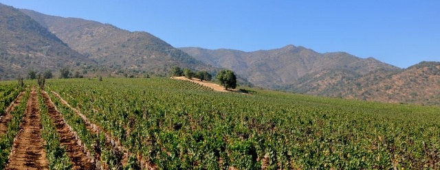 Koyle Vineyards - Chile