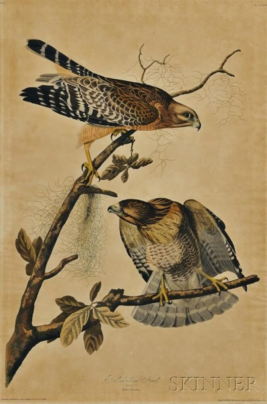 99 best images about John James Audubon on Pinterest
