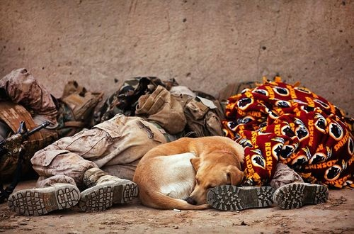 cBUP2.jpg (photography,soldiers,dog,cute): Sleep Dogs, Best Friends, Always Faithful, Army Soldiers, Detective Dogs, Memories Day, United States, War Dogs, Marines Corps