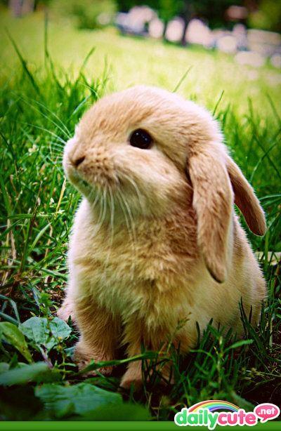 I think I wuv this wabbit.  I do. I do.