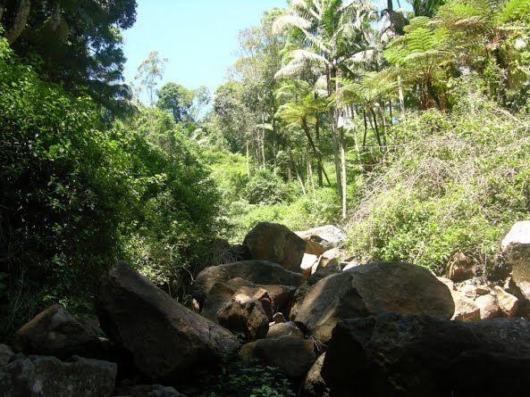 Image result for landslide after rain inside jungle forest