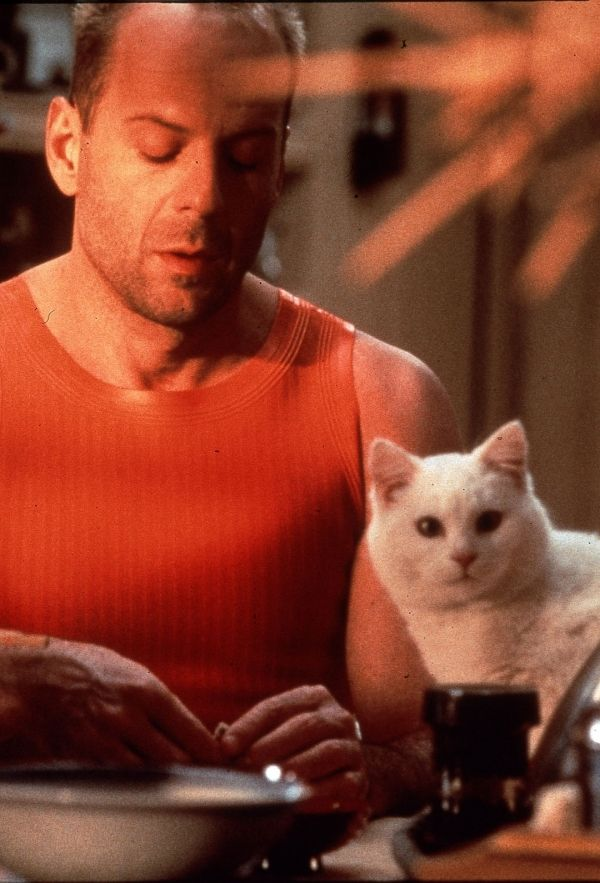 Bruce Willis with a cat. And he is too, remember he had that album where he sang and played the harmonica. You remember. They did the wine cooler commercials.