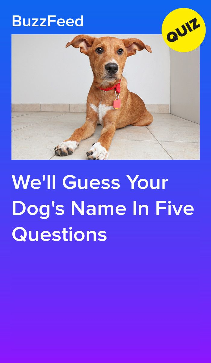 We Ll Guess Your Dog S Name In Five Questions Dog Names Dog Quizzes Dog Quiz