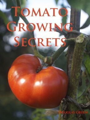 Tomatoe plant care ebook with tips for increasing harvests learned by garden author Doug Green growing tomatoes commercially for many years.