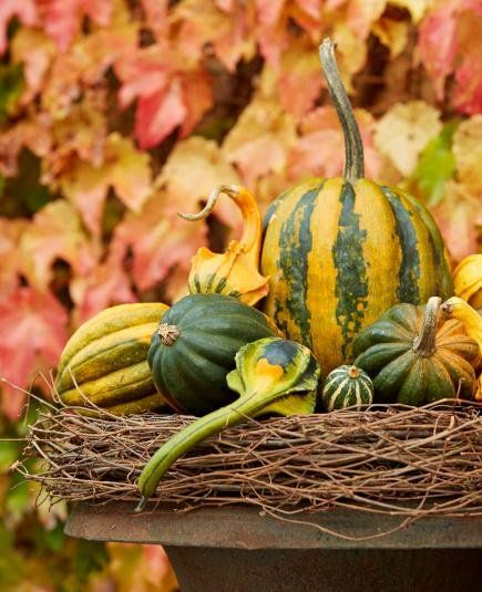 A grapevine wreath elevates a mound of striped gourds and pumpkins in a fall display it takes only minutes to assemble.