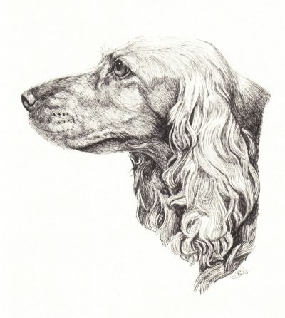 119 best how to draw dogs images on pinterest drawings dog cocker spaniel head profile dog drawing by brenda nelson painting drawing ccuart Choice Image