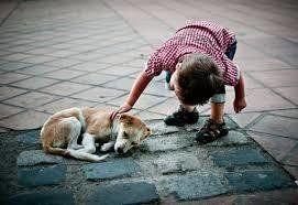 Spain - Save stray dogs. En España se abandonan 200.000 animales al año, siendo el país europeo con más abandonos.   Estos animales acaban malviviendo en la calle a merced del frío, hambre, falta de cobijo, peligros varios, atropellos, personas perturbadas que se divierten torturando animales, etc. Esto es responsabilidad nuestra,...