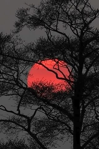 The red moon