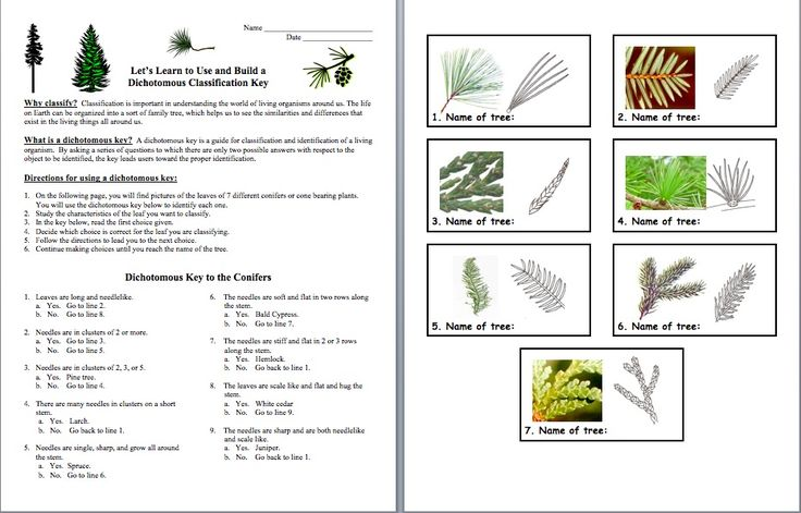 plant classification worksheet google search homeschool pinterest keys science and brown. Black Bedroom Furniture Sets. Home Design Ideas