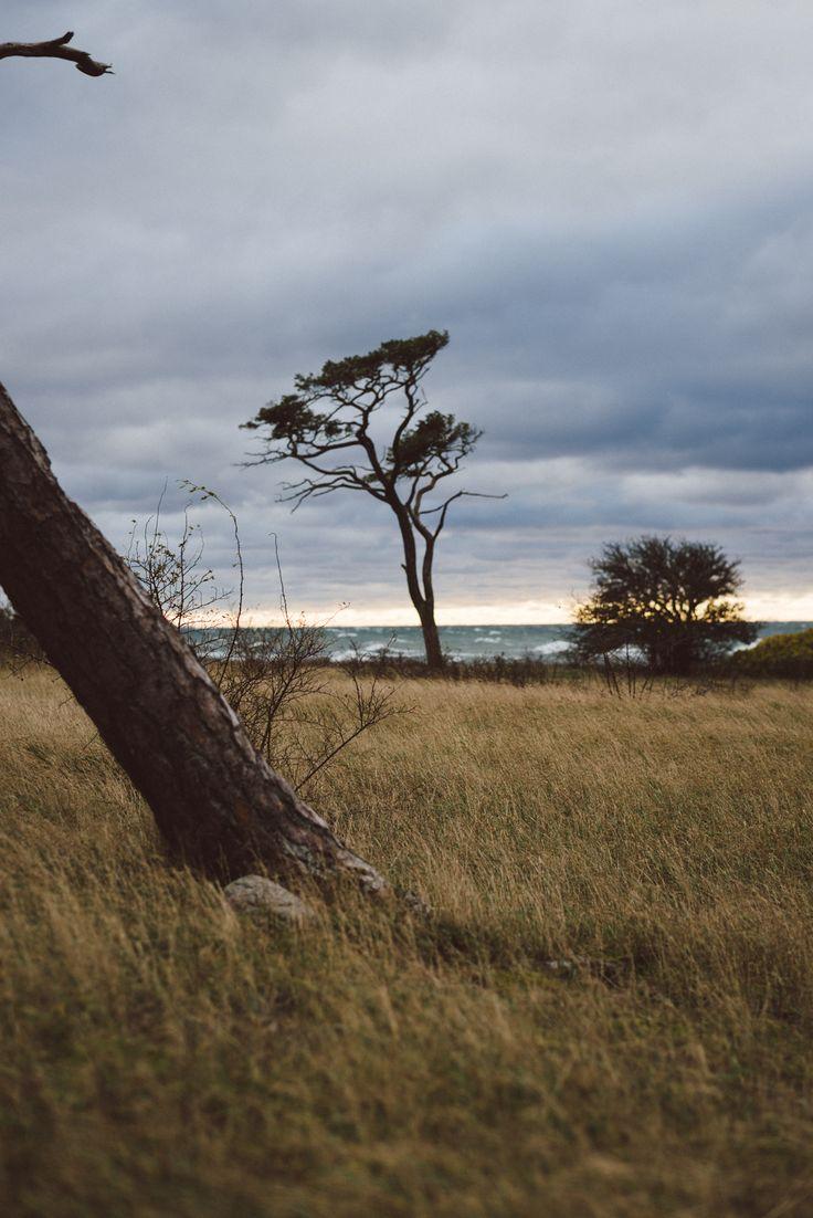 Gotland by Babes in boyland.