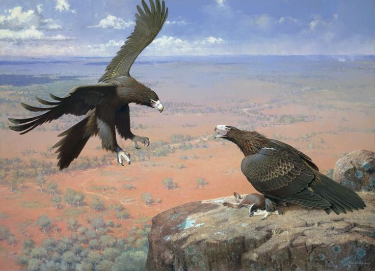"""""""Wedge Tailed Eagles"""" by William Cooper, limited edition print, available from Landsborough Galleries"""