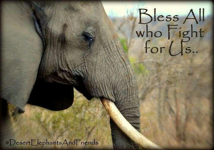 The soon endangered elephant