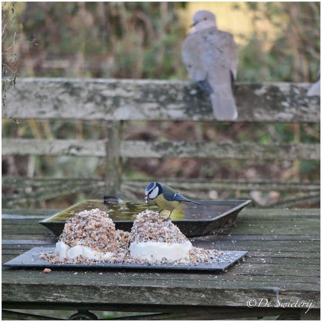 De Swieterij: birds in the garden