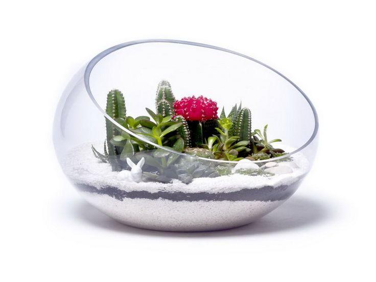How to Choose Beautiful Terrariums for Sale | Vizimac
