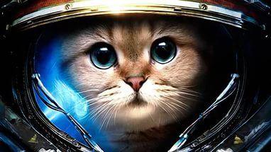 Кот космонавт.