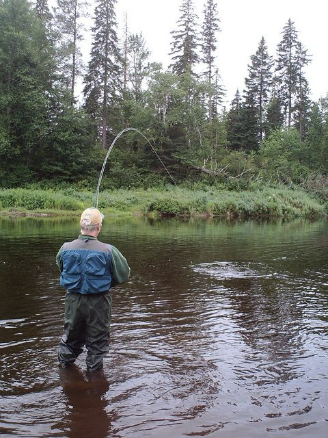 845 best images about the tug is the drug on pinterest for Atlantic salmon fishing