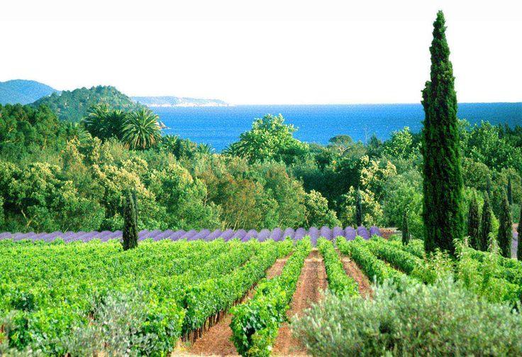 Wholesale of Provence Wines appellation (AOP, AOC) Coteaux d'Aix-en-Provence