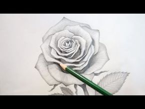 How to Draw & Shade A Rose in Pencil | step by step slow video - YouTube
