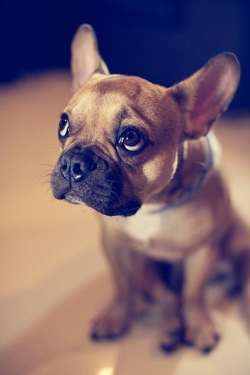 This is my 'I'm in trouble-feel-bad-for-me sad face.' Works every time.