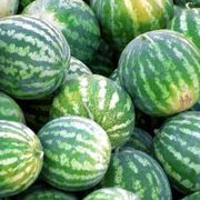 How to Trim Watermelon Vines in a Home Garden | eHow
