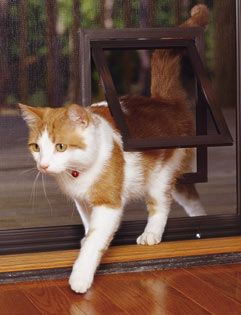 Pet Screen Door - J may need one of these!