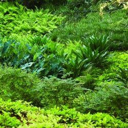Przy pracy nad projektem wokół domu, zaprojektowanego przez Edwarda Larrabee'a Barnes'a w Dallas, architekci krajobrazu z pracowni Reed Hilderbrand wybrali koncepcję interpretującą wizję architekta, która nie została do końca zrealizowana. Dlaczego? Więcej: http://sztuka-krajobrazu.pl/682/slajdy/projekt-ogrodu-ndash-zaprojektowana-natura