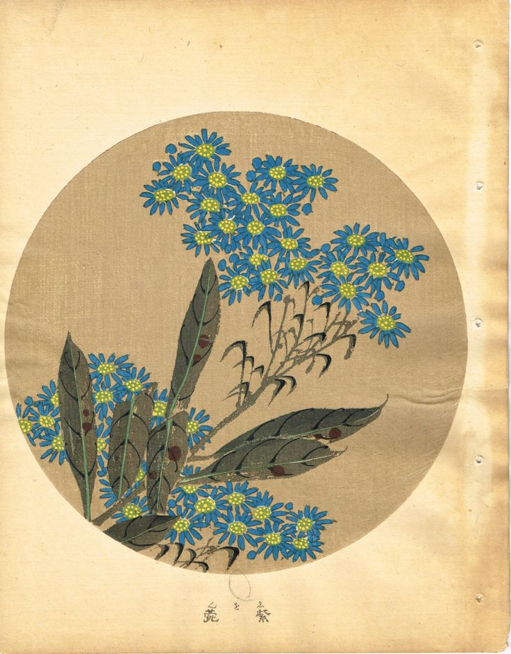 "Japanese antique woodblock print, Ito Jakuchu, ""Tatarian aster, from Jakuchu gafu"" by TakahashiHangado (8800.00 JPY) http://ift.tt/1QvGvep"