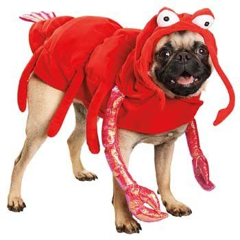 petco lobster halloween dog costume percy would look fab in this - Dog Halloween Ideas