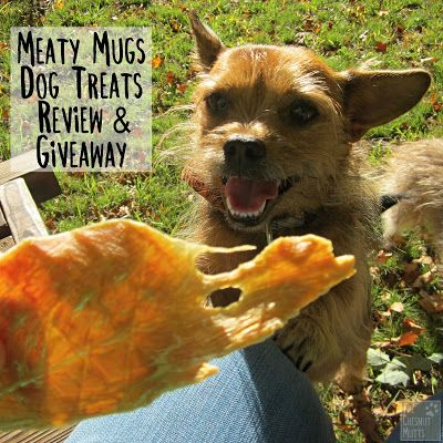 Meaty Mugs are the next best dog treat! These thin chicken jerky strips are simply irresistible! Read our review and enter our awesome giveaway here: bit.ly/MMTCM (AD)