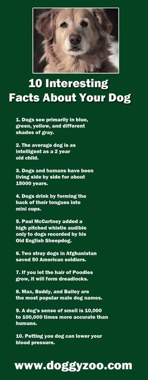10 Interesting Facts About Your Dog