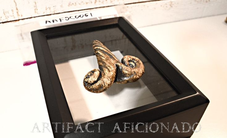 Beautifully Mysterious Sea Creature Fossil - Found only at  . . . .
