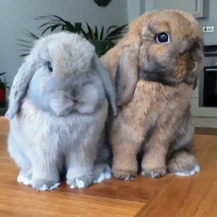 Cute Bunnies to Double Boop Their Snoots... - GIF on Imgur