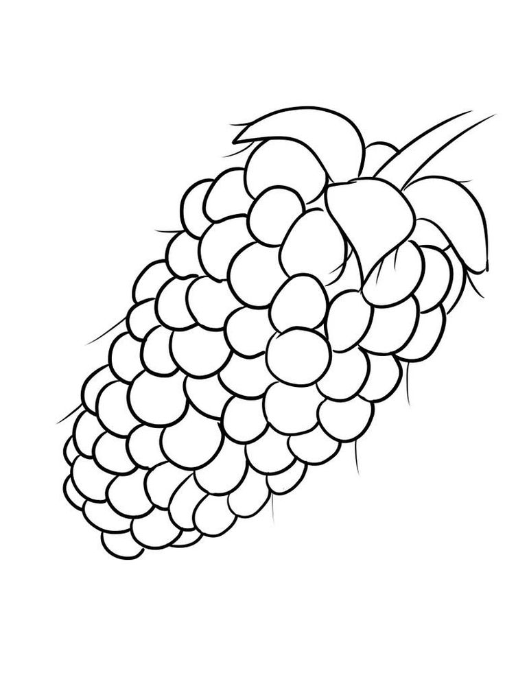 boysenberry coloring image free online. Boysenberry is a