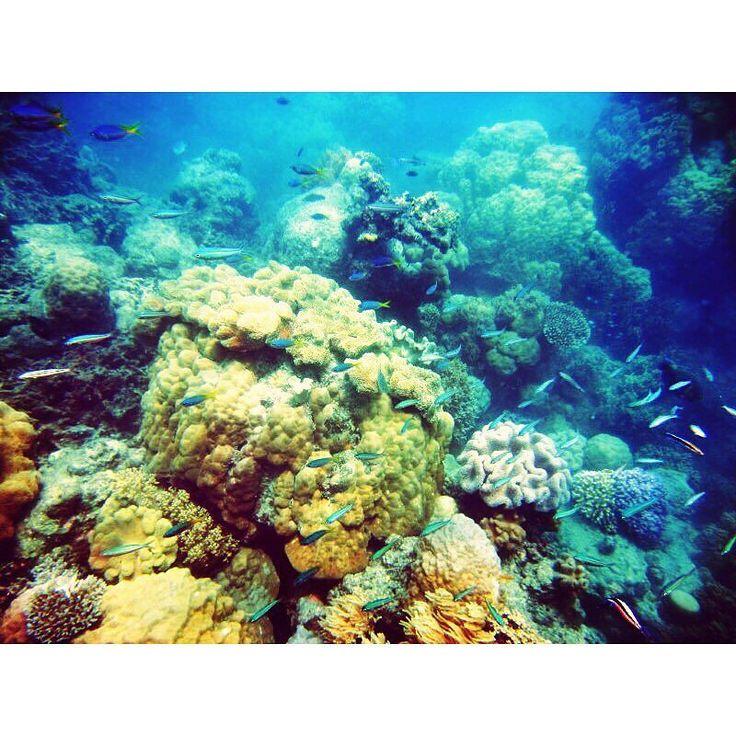 #australia #cairns #GreatBarrierReef #sea #fish #amazing #beautiful #tbt #yolo #good #memory  #オーストラリア #ケアンズ #グレートバリアリーフ #ダイビング #海 #魚 #思い出 by pekogram http://ift.tt/1UokkV2
