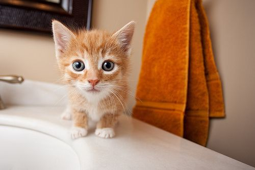 Cat: Cats, Kitty Cat, Adorable Animals, Pet, Crazy Cat, Kitty Kitty, Kittens, Eye, Cat Lady