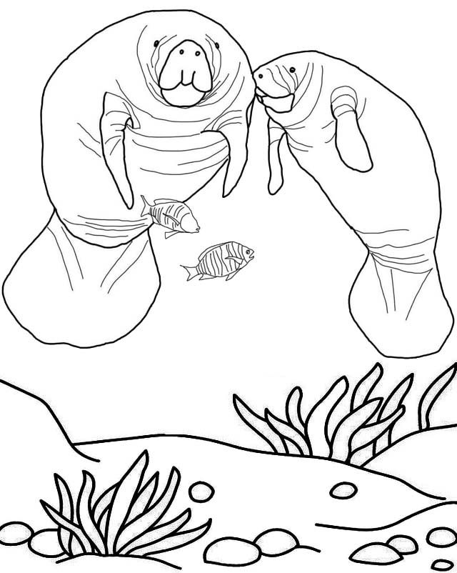 Pin By Elizabeth Endicott Heston On Animals Free Adult Coloring Pages Manatee Coloring Pages