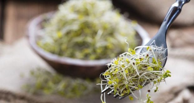 Broccoli sprouts are one of the most potent cancer-fighting foods. Discover the easy step-by-step way to grow them at home.