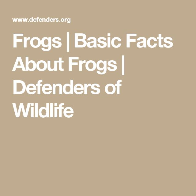 Frogs | Basic Facts About Frogs | Defenders of Wildlife